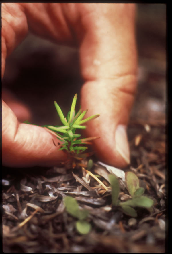 very small seedling